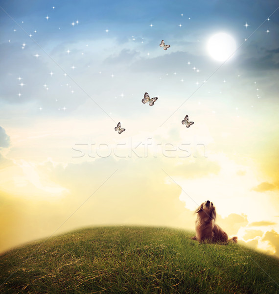 Dog looking at butterflies under the moon light Stock photo © Melpomene