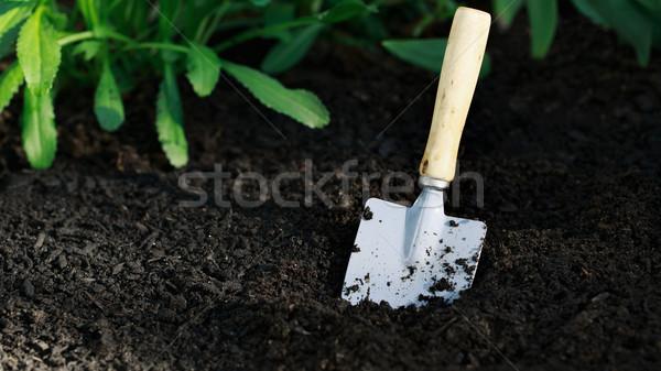Garden small shovel in vegetable garden Stock photo © Melpomene