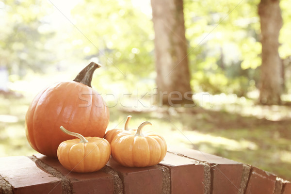 Pumpkins and squashes outside Stock photo © Melpomene