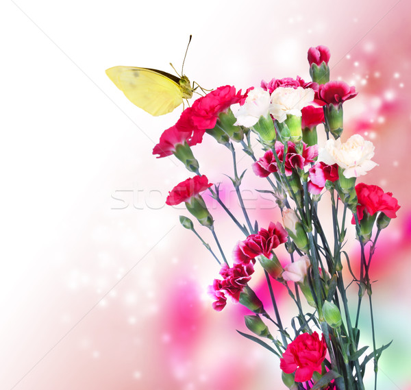 Pink Carnation with Butterfly Stock photo © Melpomene