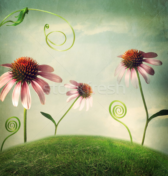 Echinacea flowers in fantasy landscape Stock photo © Melpomene