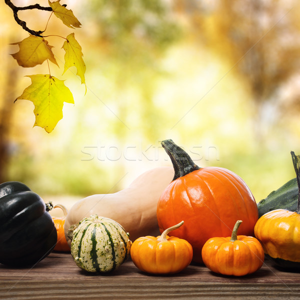 Pumpkins and squashes with a shinning fall background Stock photo © Melpomene