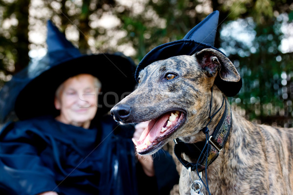 Dog and Senior in witch costume Stock photo © Melpomene