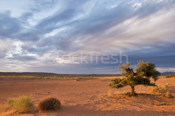 Alone tree in desert Stock photo © MichaelVorobiev