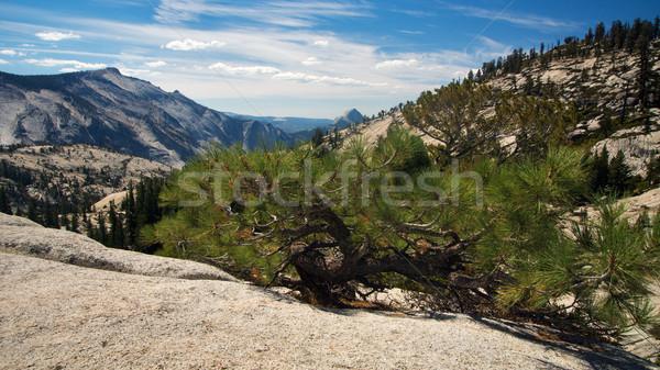Point panoramique vue yosemite USA arbre Photo stock © MichaelVorobiev