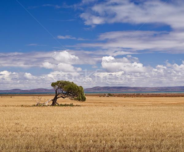 Solo árbol granja campo sur cielo Foto stock © MichaelVorobiev