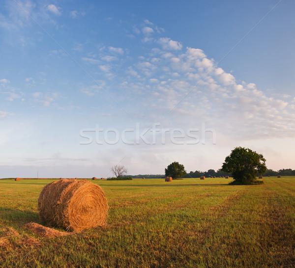 трава фермы области Канзас Восход Сток-фото © MichaelVorobiev