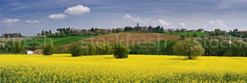 Italien paysage fleurs jaunes Toscane Italie fleurs Photo stock © MichaelVorobiev