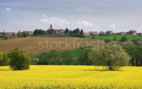 Italiano paisagem fazenda flores amarelas campo flores Foto stock © MichaelVorobiev
