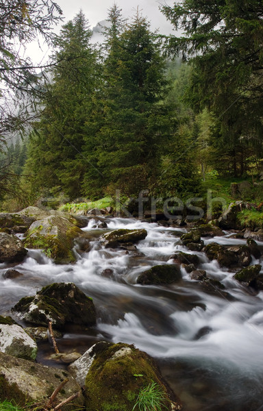 Alpino rio pequeno alpes Áustria água Foto stock © MichaelVorobiev