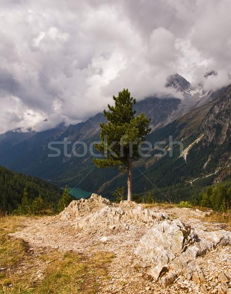 Tree on the rock Stock photo © MichaelVorobiev