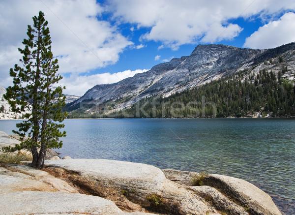 Lago yosemite panorama pinheiro árvore Foto stock © MichaelVorobiev