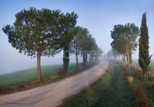 Rural road Stock photo © MichaelVorobiev