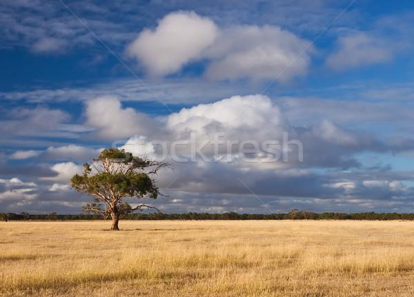 Alone tree Stock photo © MichaelVorobiev