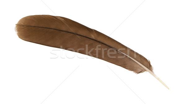 Stok fotoğraf: Büyük · kahverengi · kadın · tavuskuşu · tüy