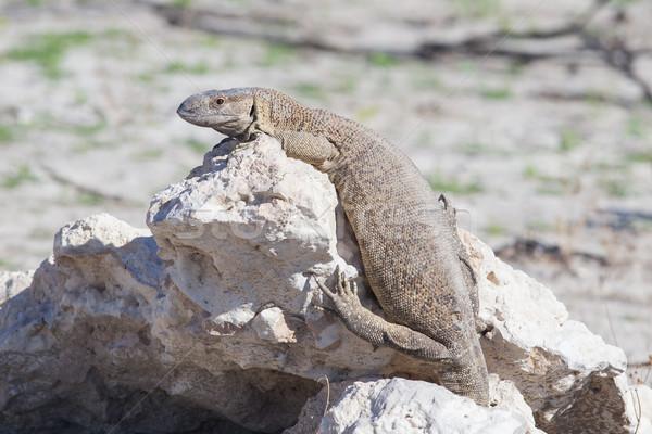 Сток-фото: редкий · рок · контроля · парка · Намибия · Африка