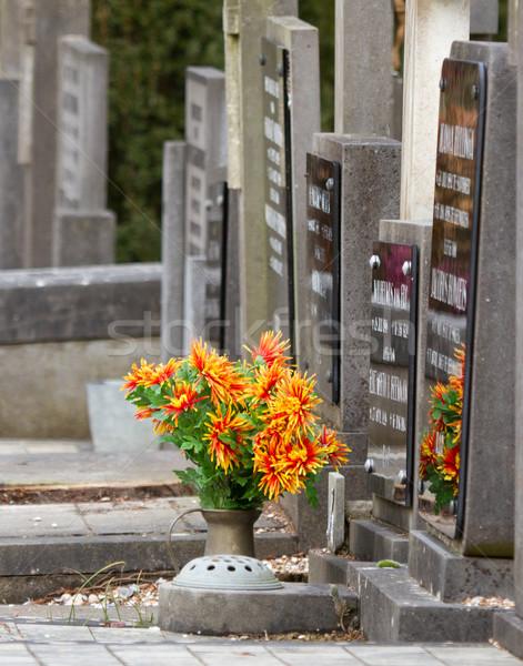 Frescos flores graves Holanda árbol construcción Foto stock © michaklootwijk