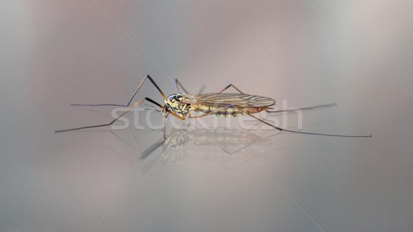 Kraan vliegen daddy lange benen vergadering glas Stockfoto © michaklootwijk