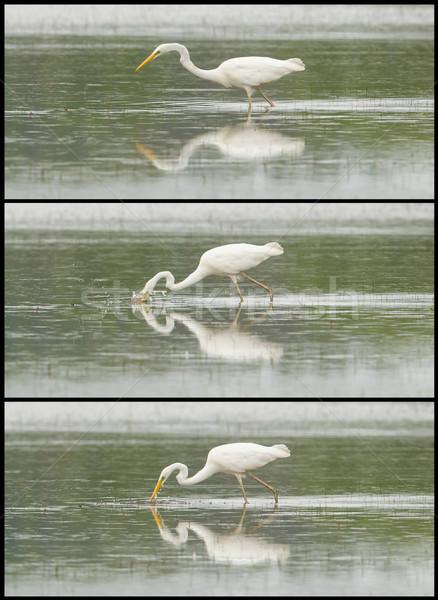 Groot witte reiger foto lopen meer Stockfoto © michaklootwijk