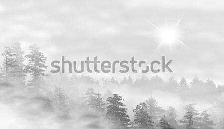 Ufo paisagem nebuloso floresta nascer do sol céu Foto stock © michaklootwijk