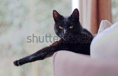 Black cat relaxing Stock photo © michaklootwijk