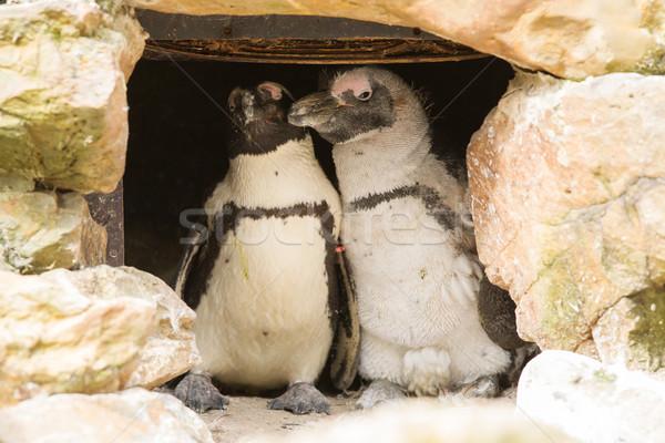 ストックフォト: アフリカ · 素材 · 巣 · 動物園 · 自然