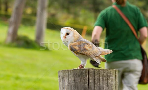 An owl in captivity Stock photo © michaklootwijk