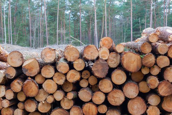 Ormancılık sanayi ağaç kereste kâğıt stok Stok fotoğraf © michaklootwijk