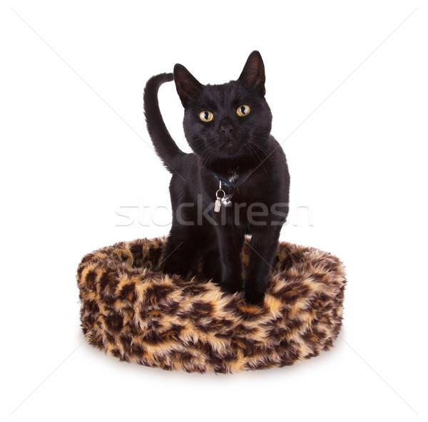 黒猫 バスケット 猫 ホーム 印刷 ストックフォト © michaklootwijk