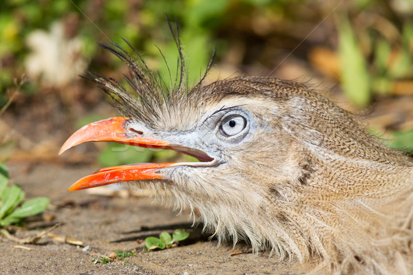 顔 自然 背景 鳥 青 羽毛 ストックフォト © michaklootwijk