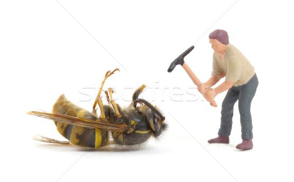 Morto vespa miniatura isolado branco abelha Foto stock © michaklootwijk