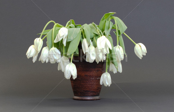 Stock photo: Vase full of droopy and dead flowers