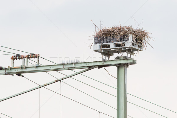 Storch Nest top Eisenbahn Bau Niederlande Stock foto © michaklootwijk