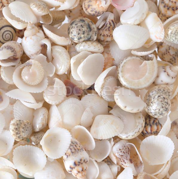 Shells background Stock photo © michaklootwijk