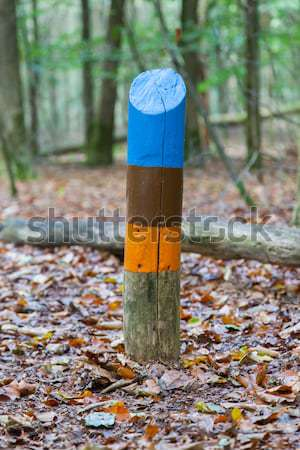 Painted marking in a dutch forrest Stock photo © michaklootwijk