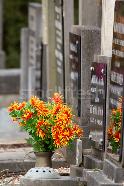 Fresche fiori tomba Holland albero costruzione Foto d'archivio © michaklootwijk