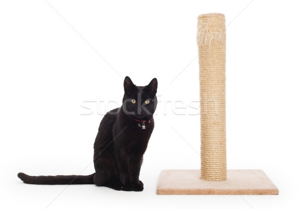 Black cat with a scratching post  Stock photo © michaklootwijk