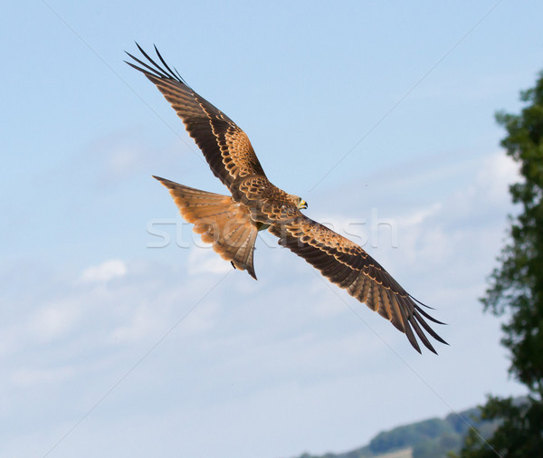 Urubu céu olho esportes natureza mundo Foto stock © michaklootwijk