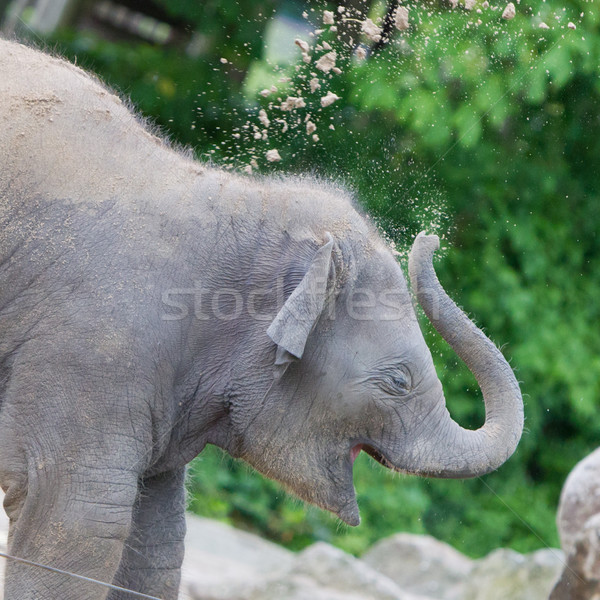 Baby elephant playing Stock photo © michaklootwijk