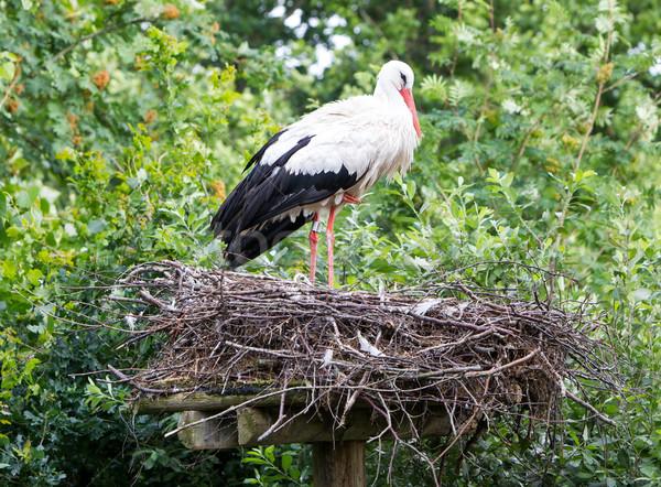 Stockfoto: Twee · volwassen · groot · nest · hemel · paar
