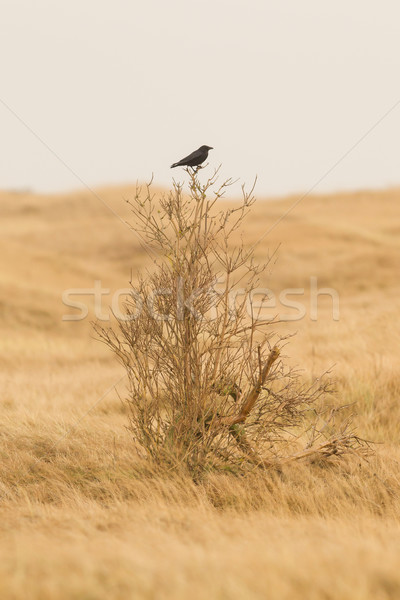Corvo sessão pequeno árvore pássaro inverno Foto stock © michaklootwijk
