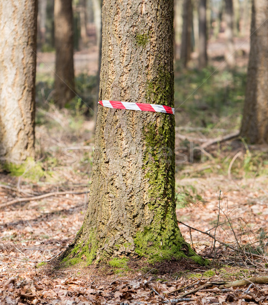 Crime scene in the woods Stock photo © michaklootwijk
