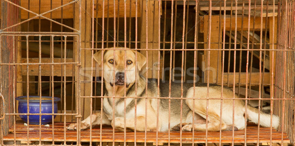 Dog in a cage in Vietnam Stock photo © michaklootwijk