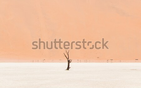 Lonely dead acacia tree in the Namib desert Stock photo © michaklootwijk