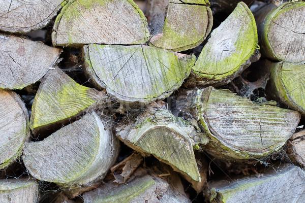 Wood pile turning green Stock photo © michaklootwijk