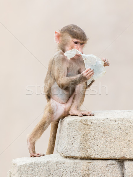 Baby baboon learning to eat through play Stock photo © michaklootwijk