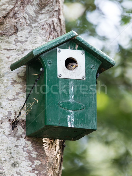 Young sparrow sitting in a birdhouse Stock photo © michaklootwijk