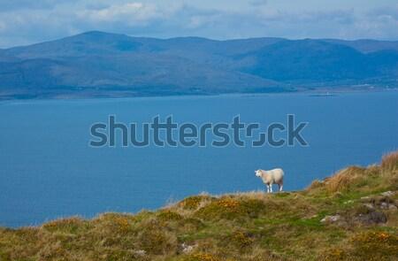 Típico irlandés vista naturaleza paisaje azul Foto stock © michaklootwijk