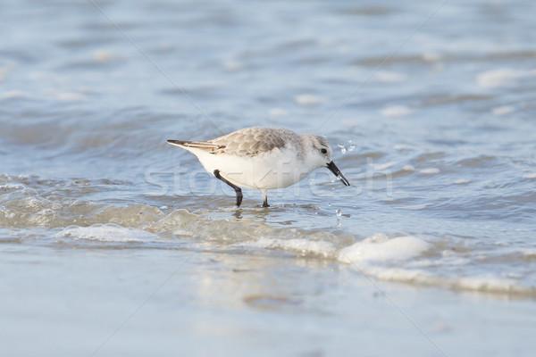 検索 食品 海 オレンジ 鳥 砂 ストックフォト © michaklootwijk