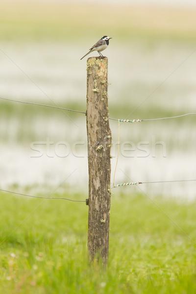 Wenig Sitzung top verwitterten Pol grünen Stock foto © michaklootwijk